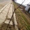Copacii de la intrarea în orașul Mărășești au fost rupți
