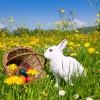 Paște fericit! Gabriel Postolache – primarul comunei Țifești