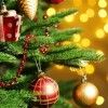 Crăciun Fericit! Florin Nedelcu – consilier județean PNL