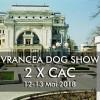 Pentru iubitorii de câini! Expoziție chinologică la Stone Park