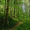 Florin Secară: PSD a numit un samsar de păduri în conducerea Romsilva – comunicat de presa