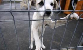 Târg de adopție pentru câinii fără stăpân