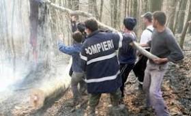 """Pădurile din Nistorești """"amenințate"""" de incendii"""