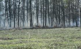 Ard pădurile