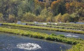 Păstrăvăria Lepșa se va reabilita printr-un proiect depus la Compania Națională de Investiții
