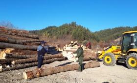 Firmele cu profil lemnos din Nereju, verificate de oamenii legii