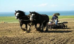 Recensămîntul agricol continuă